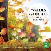 Waldesrauschen - Musik Der Natur